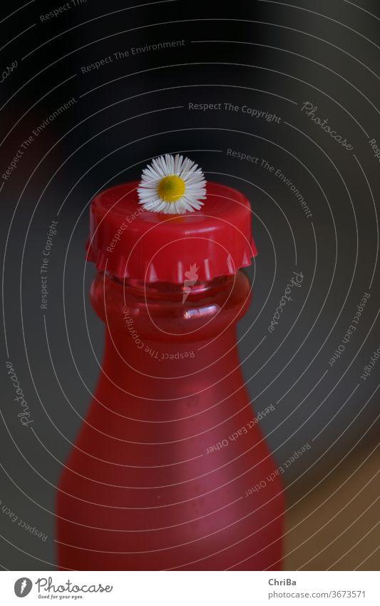 Rote Flasche mit Gänseblümchen auf dem Deckel Farbfoto natürlich ästhetisch Natur Pflanze Sommer Nahaufnahme schön Blühend frisch somerlich Blume Blüte zart