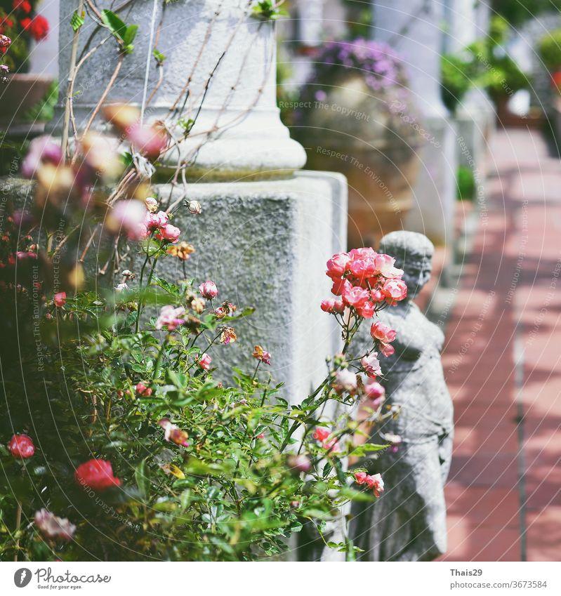 alte weiße antike Säulen und eine Frauenstatue zwischen Rosen und Blumen Antiquitäten Klassizismus Fassade Spalten Mädchen Mythologie Blätter Italien