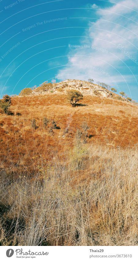 hoher Hügel mit gelbem, trockenem Gras und wenigen Bäumen, blauer Himmel und Wolken, heißer Sommertag Sonnenlicht Landschaft Baum Natur grün Feld Wiese Saison