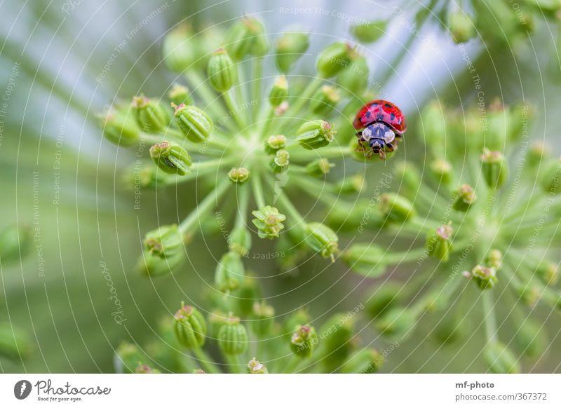 Schau mir in die Augen... blau grün rot Tier Käfer