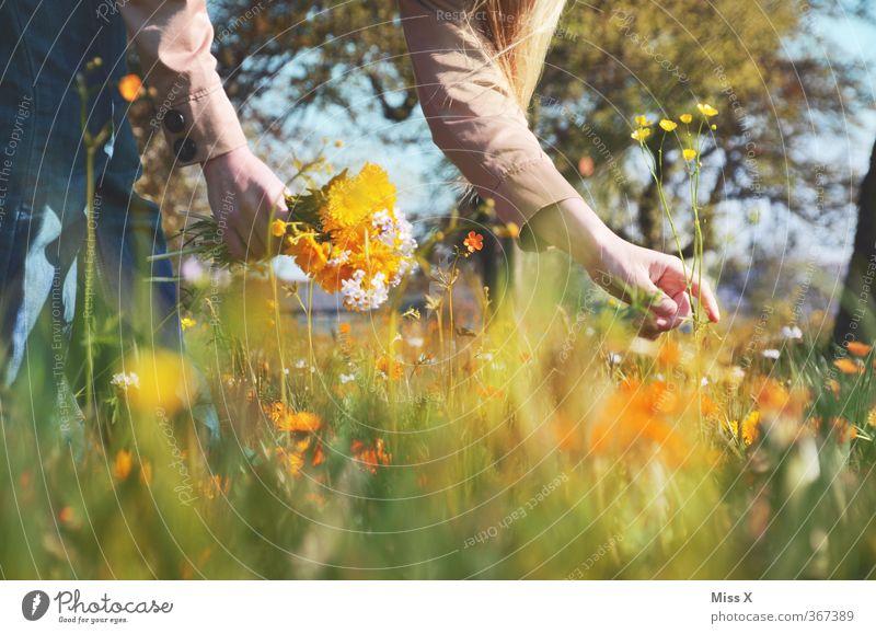 Sommerstrauß Mensch Frau Kind Jugendliche Blume Junge Frau Erwachsene Wiese 18-30 Jahre Gefühle Frühling Blüte Garten Stimmung 13-18 Jahre