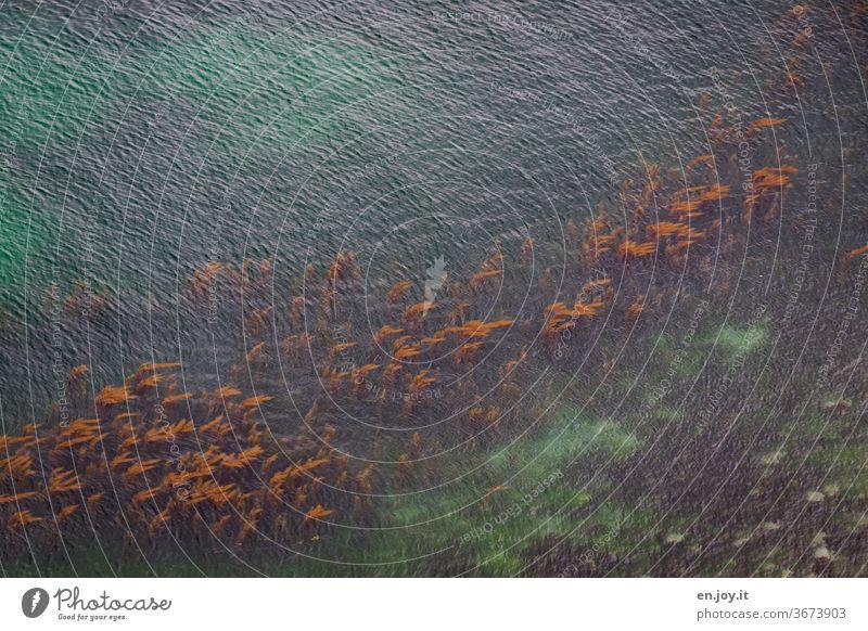 Wasserpflanzen in türkisem Meer vor der Küste Bretagnes Algen Frankreich Strömung Türkis Klar Sauber Umweltschutz Klima Klimawandel Reinheit Urlaub Reise