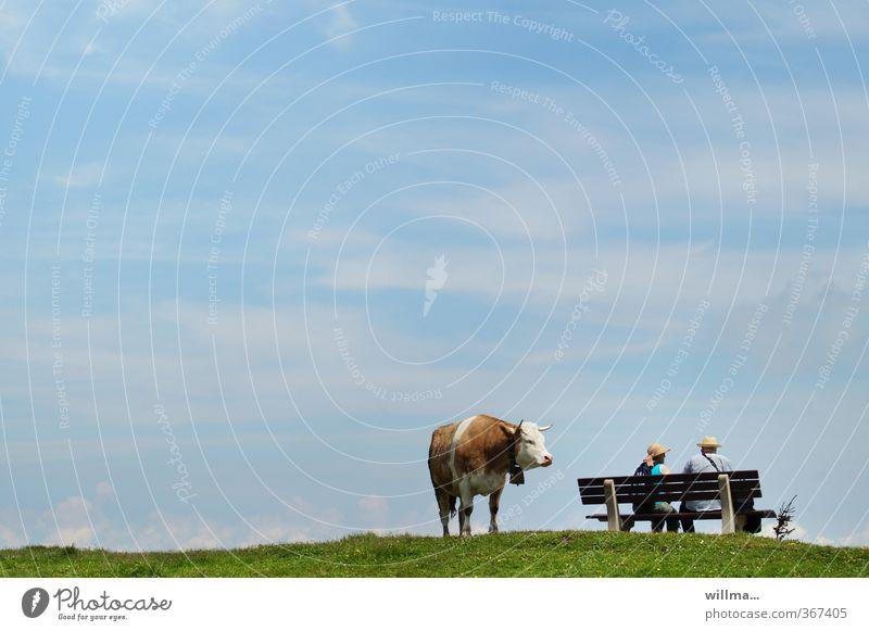 gedanken einer kuh am abgrund Mensch Himmel Erholung Tier Erwachsene Leben Paar sitzen beobachten Pause Bank Partnerschaft Kuh Irritation Überraschung