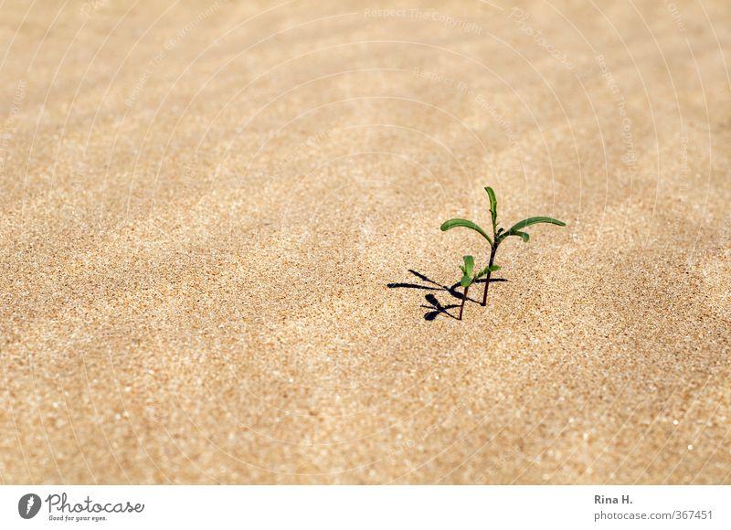 En miniature Natur Pflanze Baum Strand Wachstum Zusammensein hell klein trocken Kraft Perspektive Miniatur Sand Außenaufnahme Menschenleer Textfreiraum links