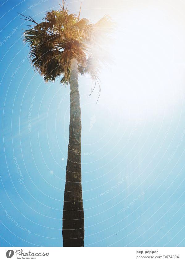 Palme im Gegenlicht mit blauem Himmel grün Pflanze Sommer Ferien & Urlaub & Reisen Sonne Tag Strand Außenaufnahme Baum Menschenleer Sommerurlaub exotisch Insel