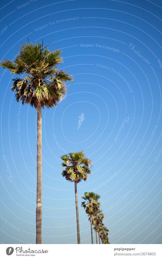 Palmen Palmenwedel Farbfoto Pflanze Natur grün Außenaufnahme Menschenleer exotisch Baum Ferien & Urlaub & Reisen Himmel Tourismus Blatt Sommerurlaub blau