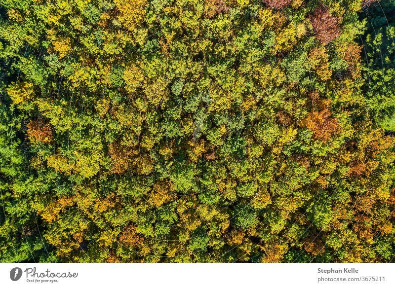Sommer warm Sonne Licht Wald Luftaufnahme Antenne Ansicht Baum Park Natur Dröhnen Landschaft grün Hintergrund reisen fallen schön golden Fotografie oben Herbst