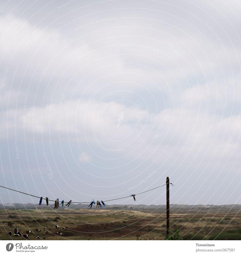 Wäscheklammern, lauernd. Ferien & Urlaub & Reisen Umwelt Natur Landschaft Himmel Wolken Dänemark Holzpfahl Pfosten Wäscheleine hängen warten dunkel einfach