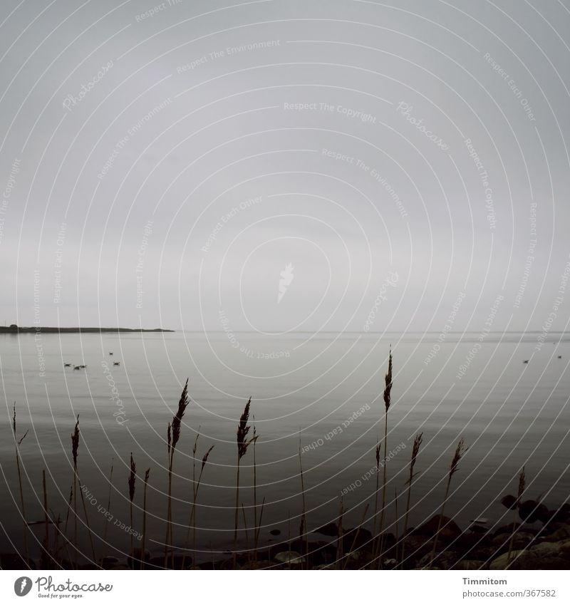 Was noch kommt. Ferien & Urlaub & Reisen Umwelt Natur Urelemente Erde Wasser Himmel Wolken schlechtes Wetter Pflanze Küste Nordsee Dänemark Blick träumen warten