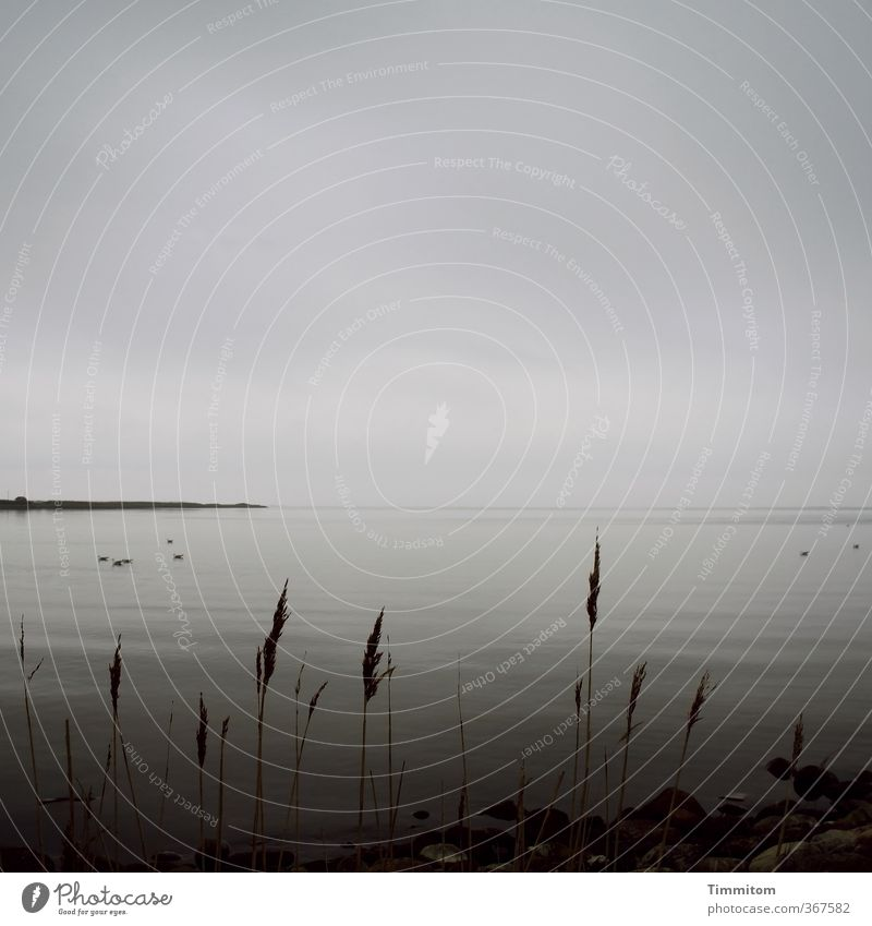 Was noch kommt. Himmel Natur Ferien & Urlaub & Reisen Wasser Pflanze ruhig Landschaft Wolken schwarz Ferne dunkel Umwelt Gefühle Küste grau Horizont