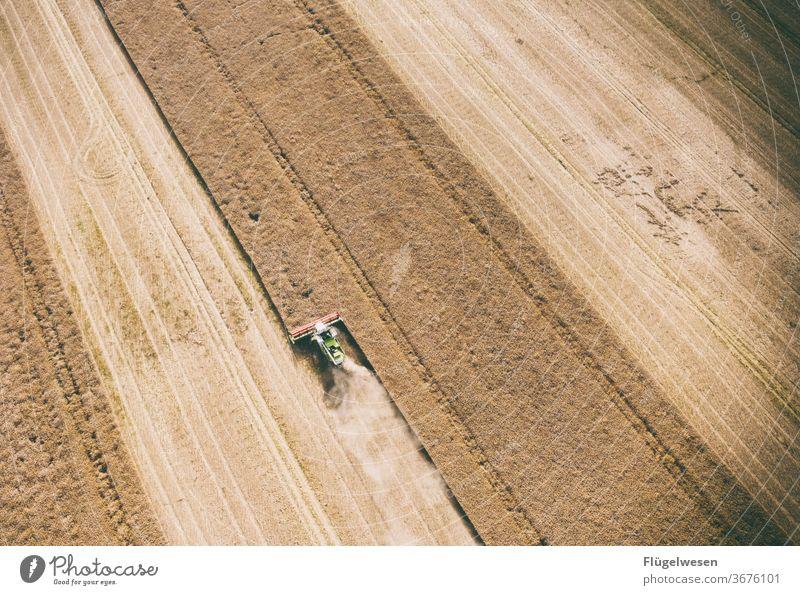 Ernte 24 Erntedankfest ernten Erntehelfer Erntezeit erntemaschine erntereif erntend erntegrad Ernte einbringen mähen Mähdrescher Weizenfeld Getreide