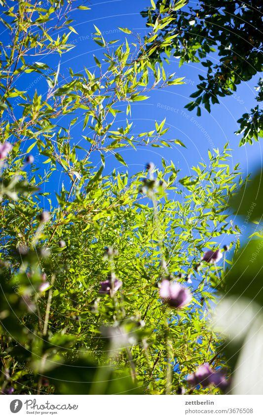 Bambus und Herbstanemonen ast baum blume blühen blüte erholung ferien garten gras himmel kleingarten kleingartenkolonie menschenleer natur pflanze rasen ruhe