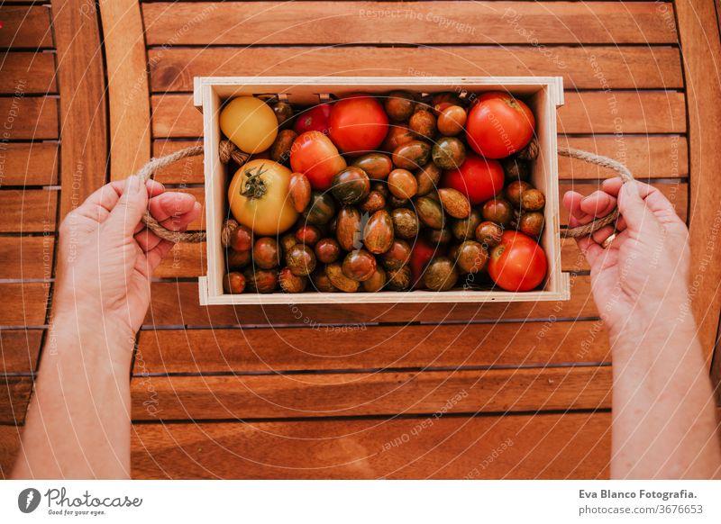 nicht wiedererkennbare Frau mittleren Alters, die mit Pflanzen arbeitet, eine Holzkiste mit frischen Tomaten hält, Gärtnerkonzept. Lebensmitte Gemüsegarten