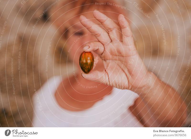 nicht erkennbare Frau mittleren Alters, die mit Pflanzen arbeitet, eine frische Tomate in der Hand hält, Gärtnerkonzept, Umweltschutz Lebensmitte Tomaten