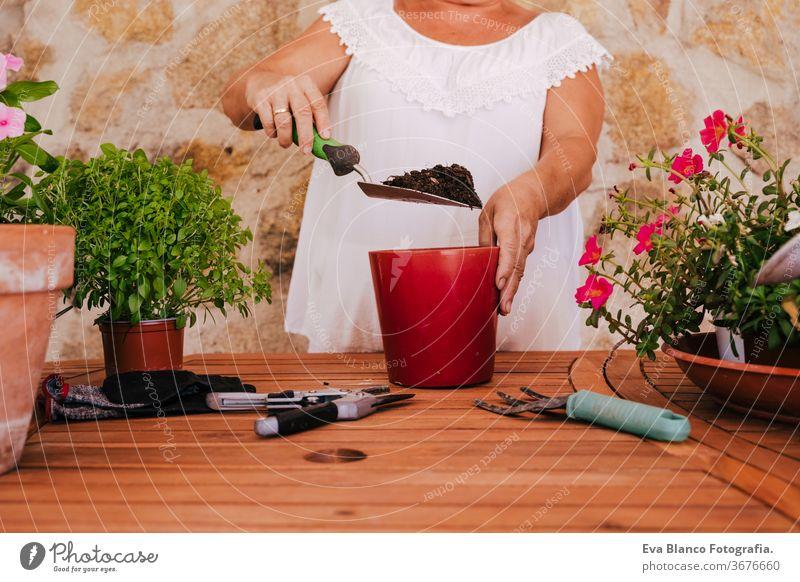 nicht erkennbare Frau mittleren Alters, die mit Pflanzen im Freien arbeitet, Gartenkonzept. Natur unkenntlich Lebensmitte 60s in den Ruhestand getreten