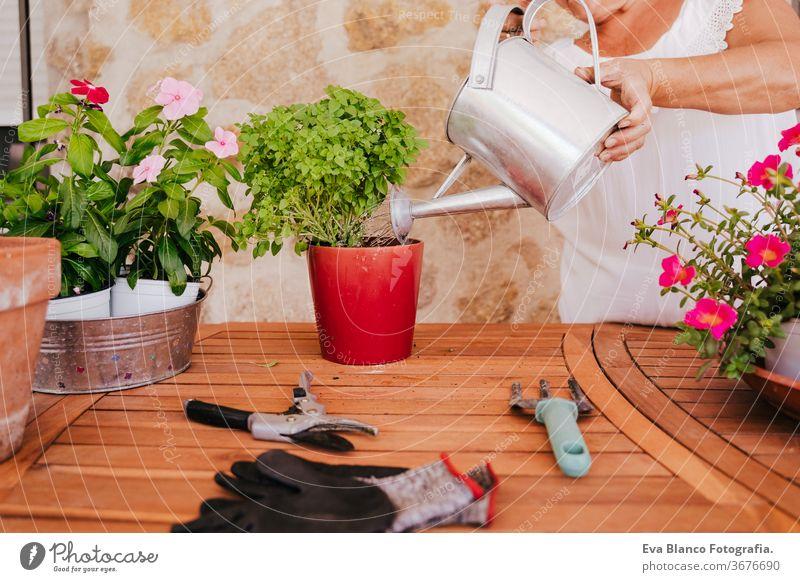nicht erkennbare Frau mittleren Alters, die mit Pflanzen im Freien arbeitet, Pflanzen gießt, Gartenkonzept. Natur Bewässerung Dose unkenntlich Lebensmitte 60s