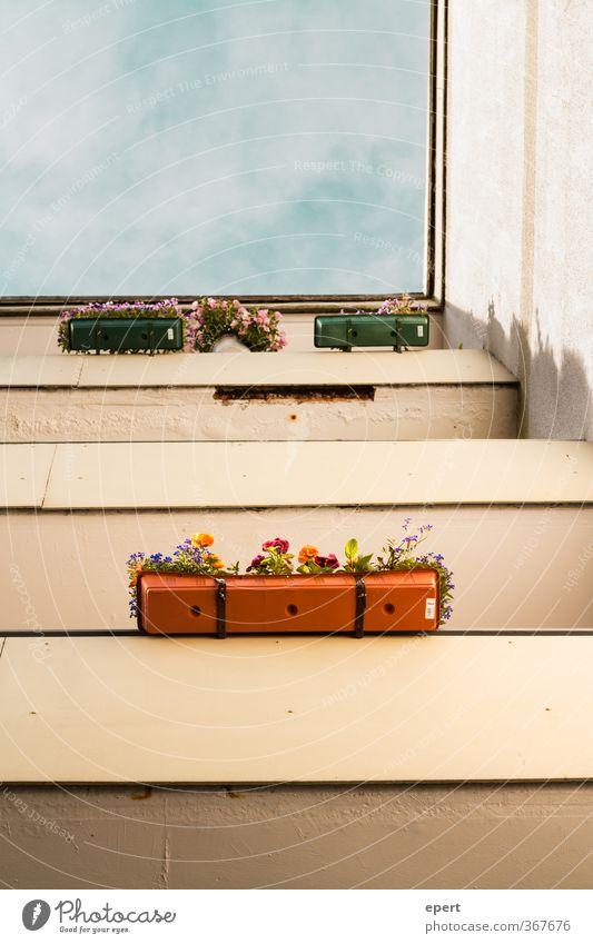 Kleingärtner Häusliches Leben Haus Dekoration & Verzierung Balkon Blume Topfpflanze Hochhaus Mauer Wand Stadt Kultur Farbfoto Außenaufnahme Menschenleer