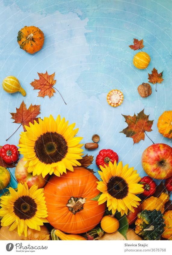 Verschiedene Kürbisse, Kürbisse, Äpfel und Sonnenblumen für den Herbst. Stillebenkomposition, kann für Thanksgiving, Halloween oder die Herbsternte verwendet werden