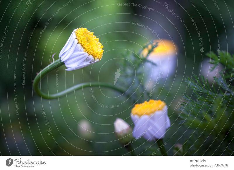 ... ziemlich verbogen Natur grün weiß Sommer Pflanze Blume gelb Frühling Grünpflanze