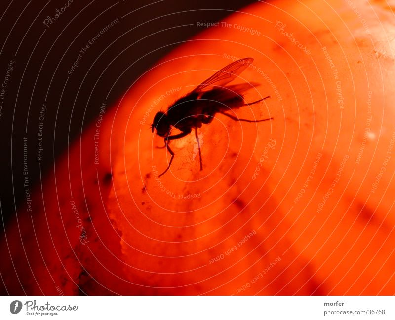 Fliege auf dem Mars Tier Wärme orange Insekt Physik Kugel krabbeln
