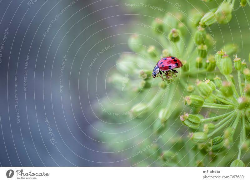 ... gut festhalten Natur Pflanze Tier Käfer 1 blau grün rot mehrfarbig Außenaufnahme Makroaufnahme Menschenleer Tag