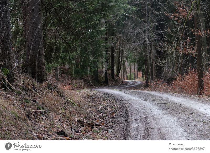 Waldweg Weg Wanderung einsam allein menschenleer Forstweg wandern Tannennadel Fichtenwald Landschaft Farbfoto Natur Außenaufnahme grün Baum Umwelt Ausflug