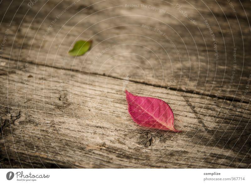 im Herbst Wellness Erholung ruhig Duft Kur Spa Pflanze Baum Blatt fallen grün rosa Idylle Herbstlaub herbstlich Bank Holzbank Farbfoto Außenaufnahme