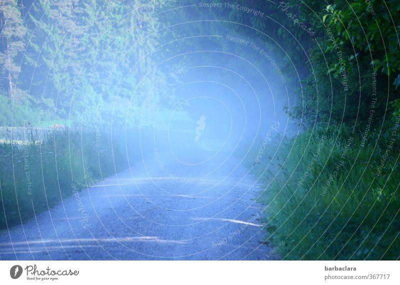 Staub aufwirbeln blau grün Sommer Landschaft Wald Umwelt Wiese Bewegung Wege & Pfade Sand außergewöhnlich Luft PKW Feld wild Erde