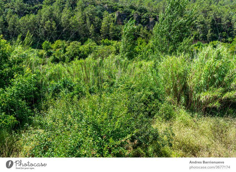 Blick auf die Landschaft des Flussbetts des Mijares-Flusses mit viel Vegetation in sehr grünen Tönen, während er durch die Stadt Ayodar fließt Szene bewachsen