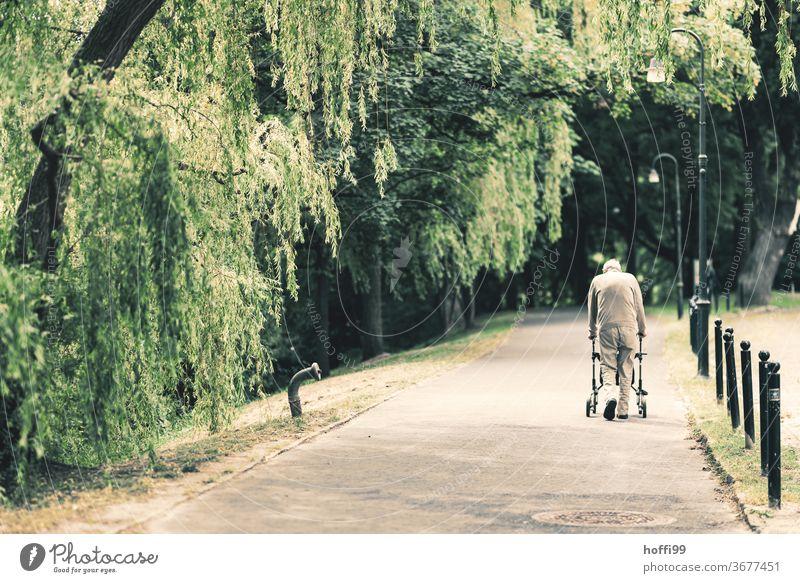 der alte Mann geht seine tägliche Runde durch den nahgelegenen Park altern Alt Senior Seniorenheim park Spaziergang allein Einsamkeit 60 und älter