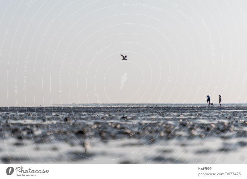 Wandern im Watt bei Ebbe mit Hund und Möwe gehen 1 Mensch Schlick Gezeiten Wattenmeer Meer Bewegung hell maritim nass Nordsee Küste Wege & Pfade Erholung