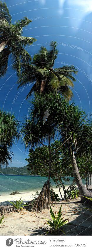 Ko Lipe Thailand Strand Meer Küste Sonne ruhig Palme Sommer Panorama (Aussicht) Weitwinkel Ferien & Urlaub & Reisen Einsamkeit unberührt Ferne grün Sand Insel