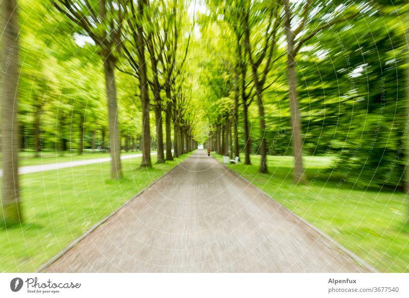 Tunnelblick | UT Kassel 19 Wald grün Natur Baum Farbfoto Geschwindigkeit Geschwindigkeitsrausch Menschenleer Bewegung Unschärfe Experiment mehrfarbig
