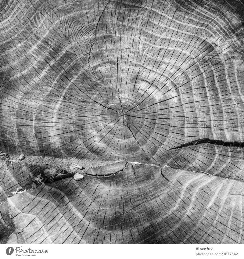 Geburtstagskalender Jahresringe Baumstamm Holz Außenaufnahme Natur Menschenleer Strukturen & Formen Umwelt Nahaufnahme braun Muster Detailaufnahme Wald