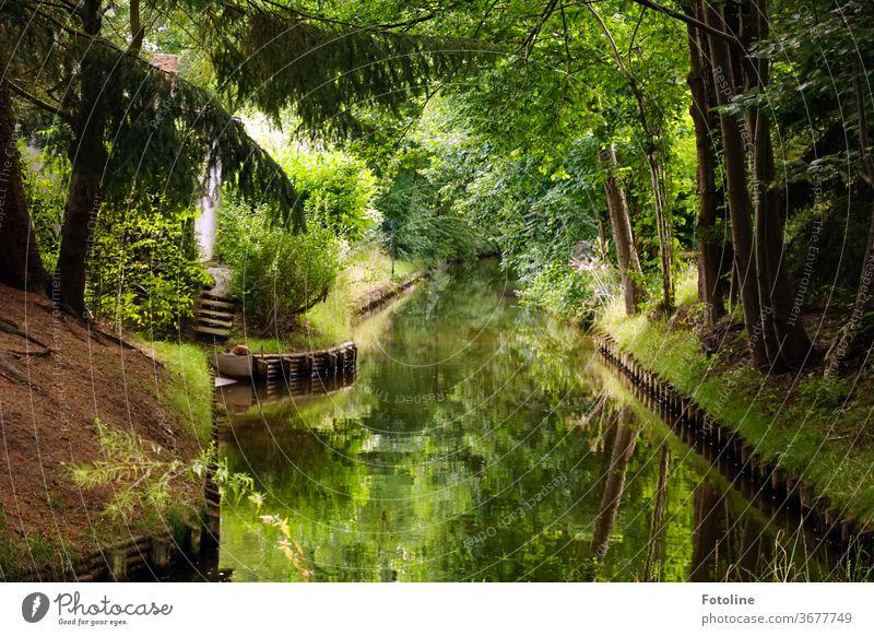 Spreewaldpanörama Wasser Außenaufnahme Natur Fluss Baum Landschaft Farbfoto Umwelt Wald Menschenleer Pflanze Reflexion & Spiegelung Flussufer Schönes Wetter