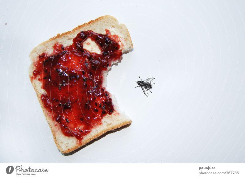 Lebensmittel Angst Fliege Wut Süßwaren Frühstück Brot bizarr Surrealismus Aggression Ärger Entsetzen unsinnig Rache Marmelade Toastbrot