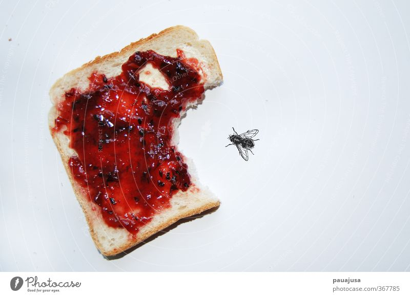 Marmeladenrache Lebensmittel Brot Süßwaren Toastbrot Frühstück Fliege Entsetzen Wut Ärger Aggression Angst bizarr Surrealismus Rache David und Goliath unsinnig