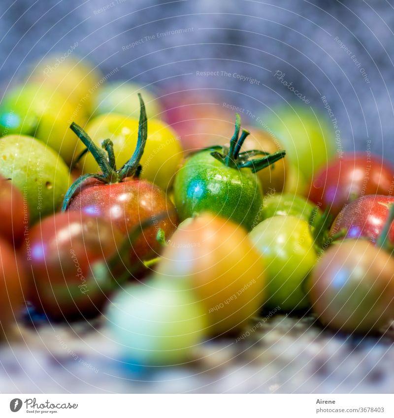 der Rest vom Sommer Tomate gelb grün rot frisch vegetarisch vegan Essen saftig Menge reif Diät Tomaten Bioprodukte bunt viele natürlich Haufen Gesunde Ernährung