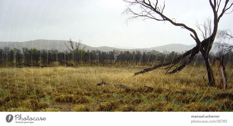 Rainy schön Baum Wolken Gras Regen Landschaft nass bizarr Australien schlechtes Wetter