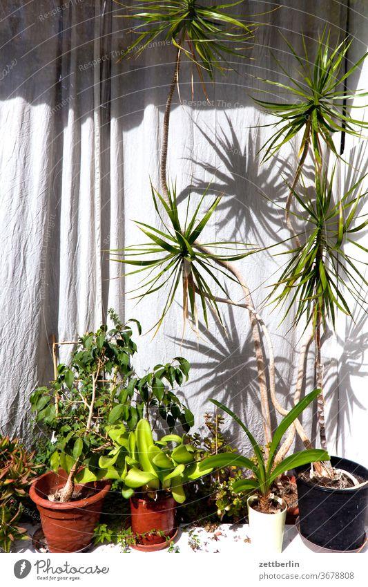 Schaufenster mit Topfpflanzen blume blumentopf deko dekoration laden menschenleer natur schaufenster sommer stamm strauch textfreiraum tiefenschärfe topfpflanze