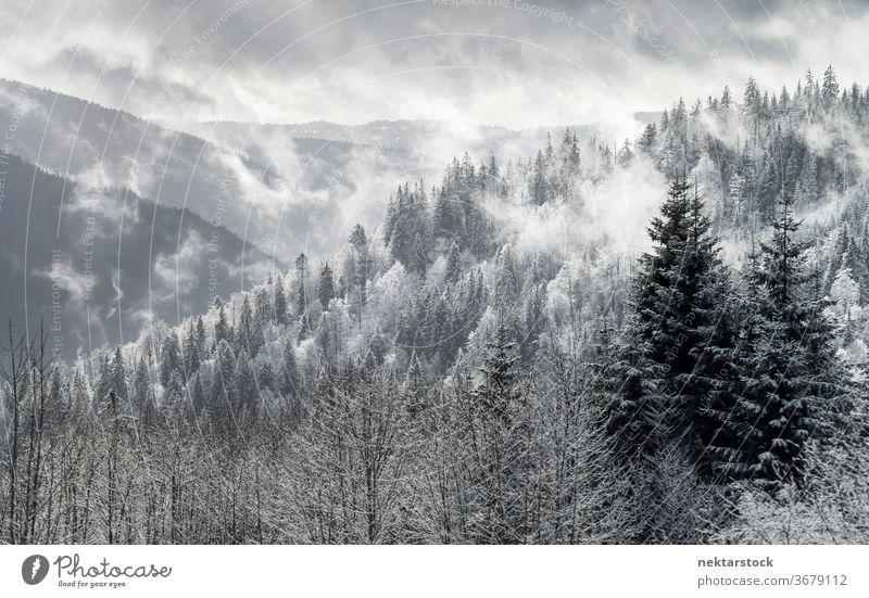 Tannenwald-Winterpanorama im Schwarzwaldgebirge Wald Schnee Nebel Cloud Berge u. Gebirge Kiefer Panorama Himmel weiß grau Pinienwald Deutschland Landschaft