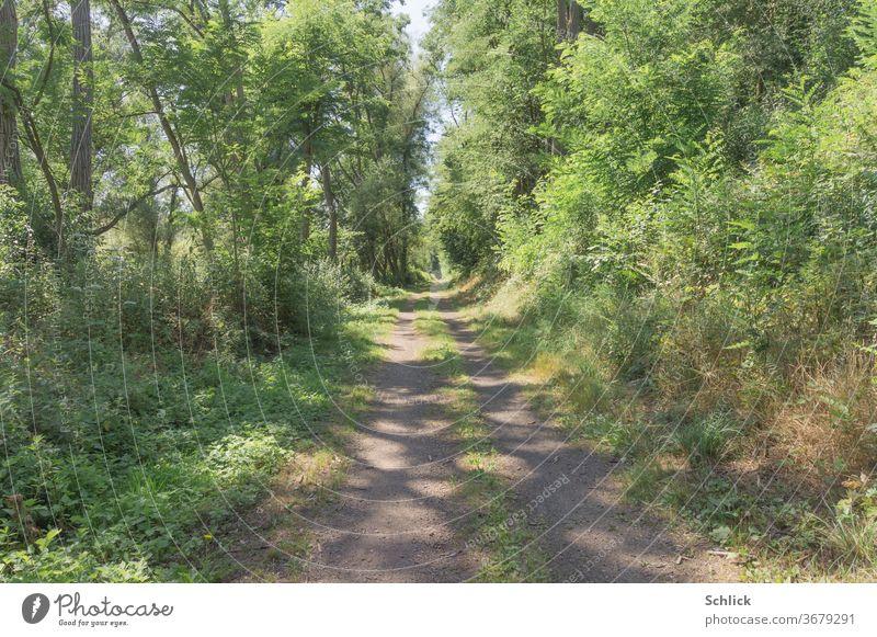 Sonniger Weg mittags Sommer Wald Lichtflecken sonnig Bäume grün Natur Waldweg Fedweg Büsche wild Mittag niemand Pflanzen