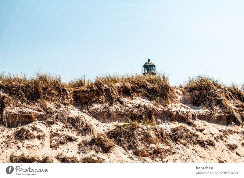 leuchtturmliebe Fernweh Sehnsucht Dünengras Sand Sehenswürdigkeit Fischland-Darß Deutschland Leuchtturm Menschenleer Wahrzeichen Erholung Sommer Natur Strand