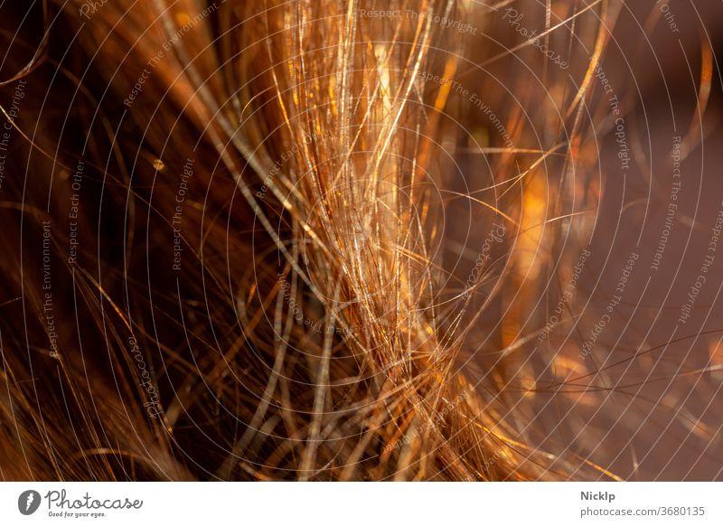 rot braune Haare im Gegenlicht der Abendsonne - Haarsträhnen Haare & Frisuren Strähnen Junge Frau Mensch Sommer Stimmung Lichtstimmung Dämmerung Intimität
