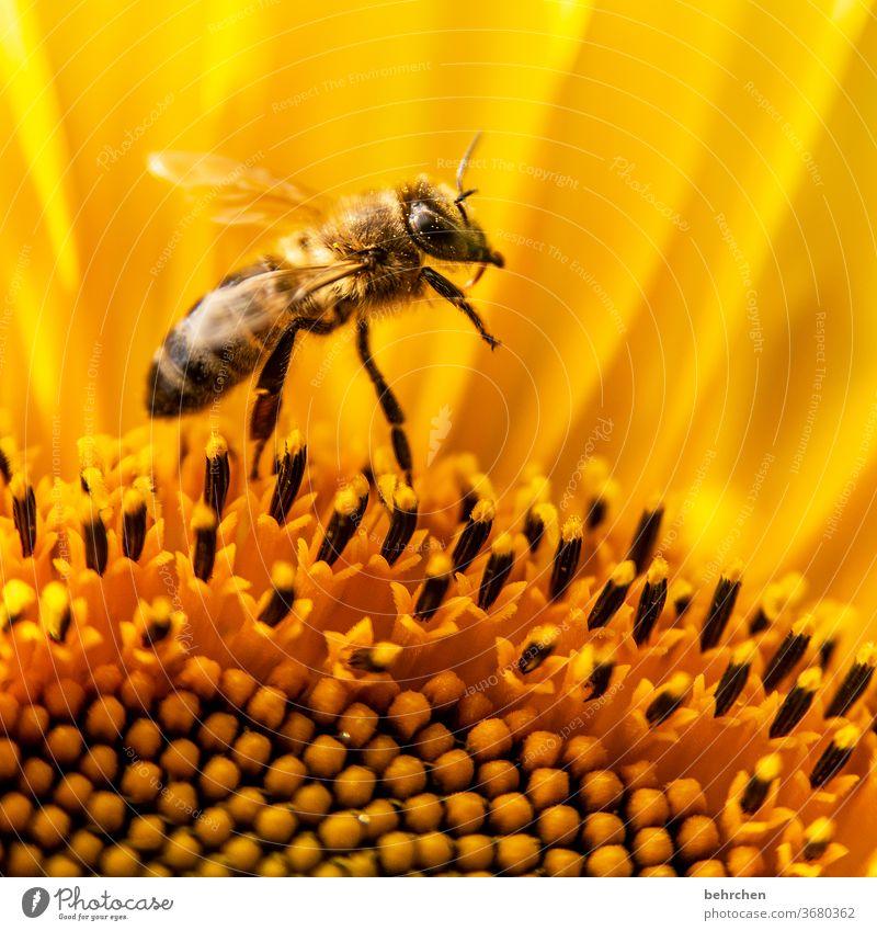 endlich sommer, yeah... gelb Kontrast Tierporträt Wildtier Farbfoto Frühling duftend Duft Sommer Außenaufnahme Pflanze Natur wunderschön blühen Blüte Blume