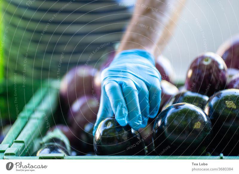 Auberginen mit Handschuhen von Hand pflücken Pandemie Markt Bioprodukte produzieren Sommer grüner Markt Gesundheit frisch Vorsicht Hygiene Lebensmittel