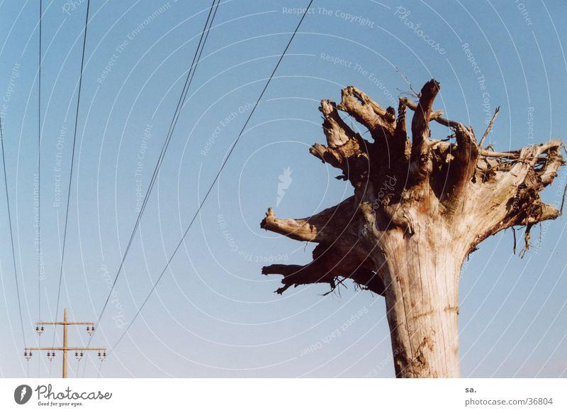 Adern Himmel Baum blau Linie Elektrizität Gegenteil