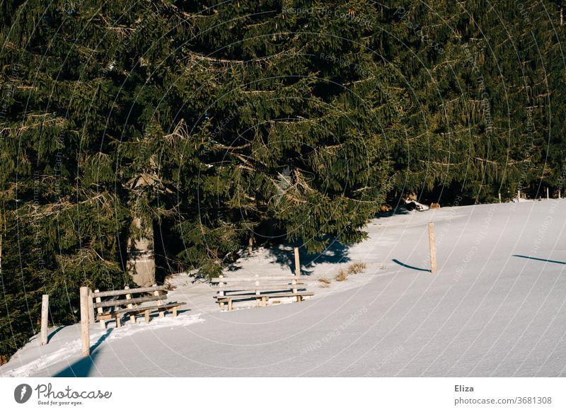 Zwei Sitzbänke in schneebedeckter Landschaft mit Wald dahinter im Winter Sitzbank Schnee Winterlandschaft kalt sonnig Schneelandschaft Natur wandern Ausflug