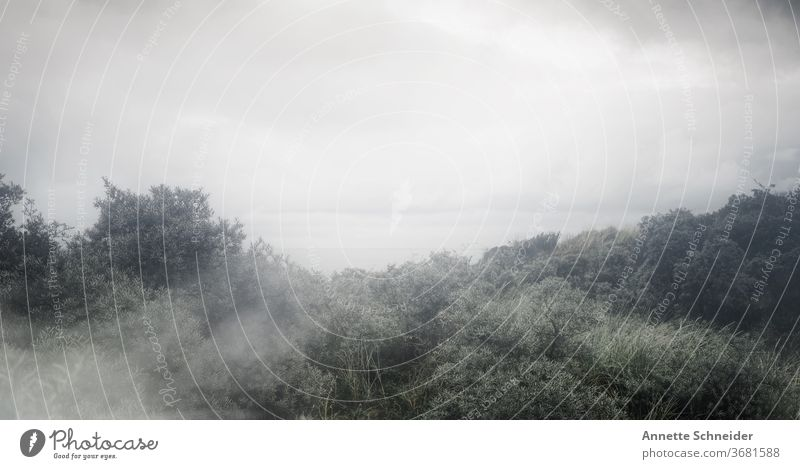 Meerlandschaft im Nebel horizont Ferne Horizont Unendlichkeit Freiheit Natur Außenaufnahme Landschaft Menschenleer ruhig Ferien & Urlaub & Reisen Umwelt Fernweh