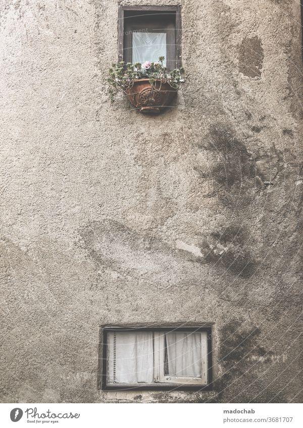 Blumenmeer Fassade Haus Fenster kaputt alt trist Verfall renovieren Renovieren Vergänglichkeit Mauer Ruine Vergangenheit Zerstörung Gebäude Außenaufnahme